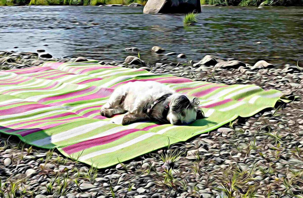 Bandit laying on blanket along river's edge in Alaska