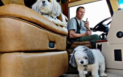 Traveling with dogs? What you need to know?